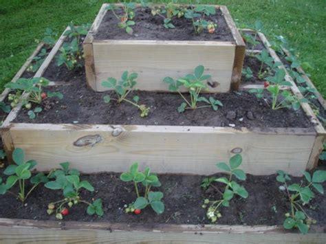 raised strawberry bed van wie variety raised strawberry bed