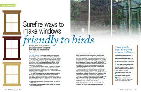 15 products that prevent birds from hitting windows