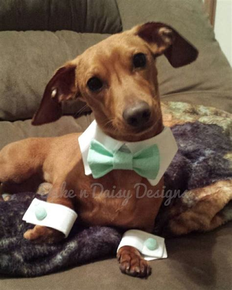 Wedding Attire Dogs by 13 Best Dogs Wedding Attire Images On