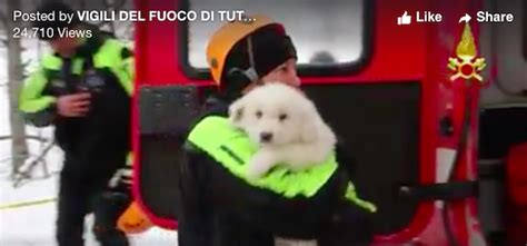 puppies rescued in italy puppies rescued from avalanche in italy give rescuers of more survivors critter