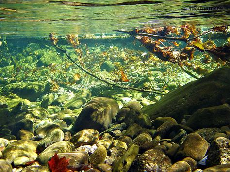 underwater pictures  trout streams page