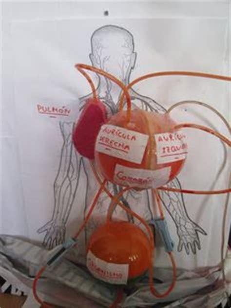 como aser sistema circulatorio con materiales reciclables 1000 images about maquetas de los sistemas digestivo