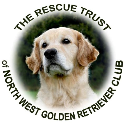 golden retriever network west golden retriever rescue the cheshire pet charity network