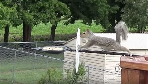 man fails at squirrel proofing the bird feeder