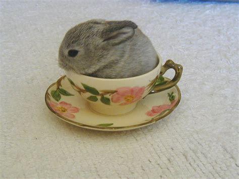 Kaos Bunny And Cup Of Tea teacup bunny 8 8 01 flickr photo
