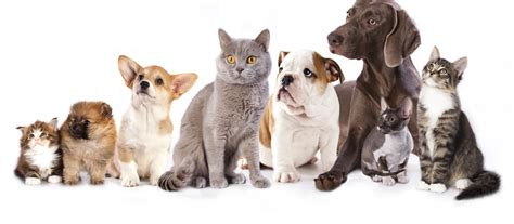 places to board dogs near me dogs for adoption near me pets world