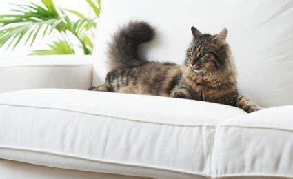 pet friendly couch fabric cool window treatment ideas for man cave decor styles