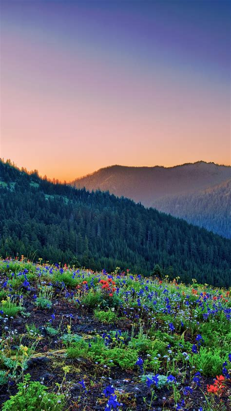mountain sunrise scenary iphone wallpaper iphone wallpapers