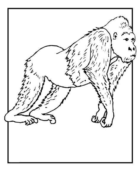 printable animal pictures of wild animals coloring pages of wild animals coloring home