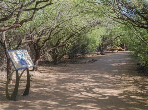 Scottsdale Desert Botanical Garden Desert Botanical Garden In Is Recommended Part Of Scottsdale Tour