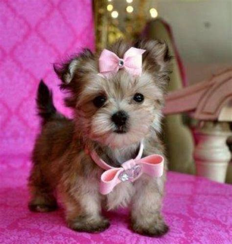 puppy bows puppy with pink bows dogs and cats