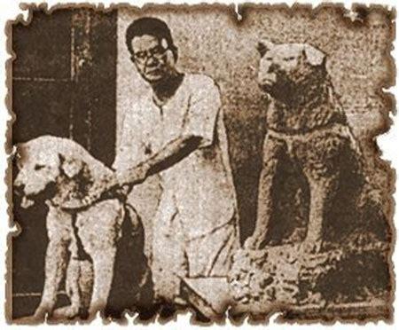 Loyal Dog Hachikō   True Story   Symbol Of Loyalty Hachiko Movie