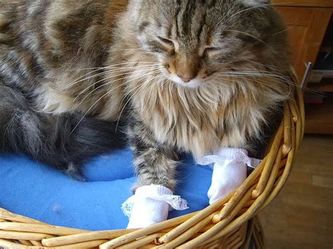 cats wearing socks caterville