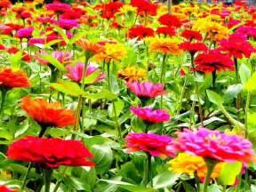 Bloomingflowers Gallery For Gt Blooming Flowers