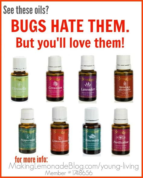 essential oils bed bugs 1000 images about what a great idea on pinterest