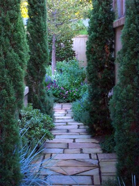 landscaping pathways 17 best images about tall and narrow plants and trees on