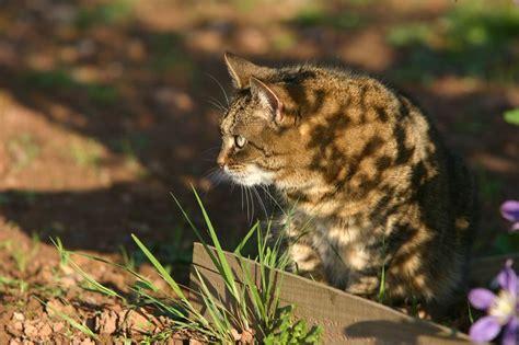cats prey cat stalking prey