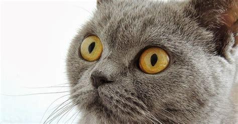 imagenes sin copyright com imagenes sin copyright gato con cara de asombrado