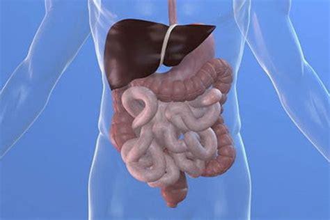 alimenti digestivi la digestione