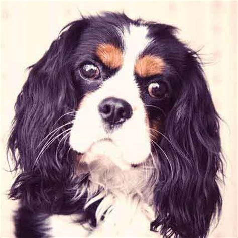 Do Springer Spaniels Shed by Petcarerx Coupons 2017 2018 Best Cars Reviews