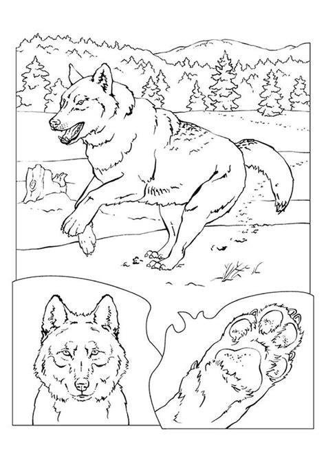 dessins de coloriage animaux de la foret  imprimer