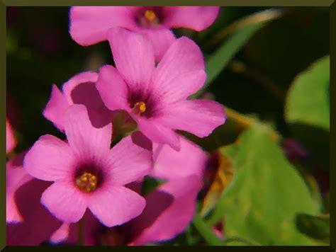 immagini di ci di fiori pet 250 nia oh jardineira