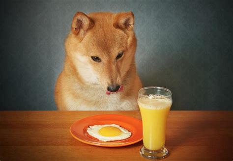 eggshells for dogs can dogs eat eggs health benefits side effects preparation