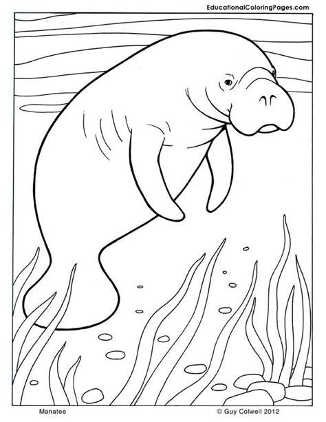 Brownies Manaree manatee coloring mammals coloring pages mammals coloring pages coloring pages