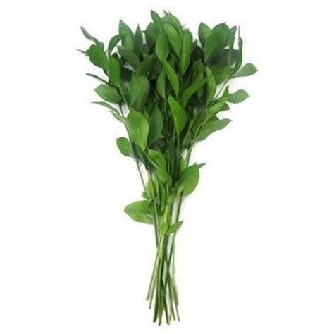 Hard Ruscus Israeli 60cm   Wholesale Flowers & Florist