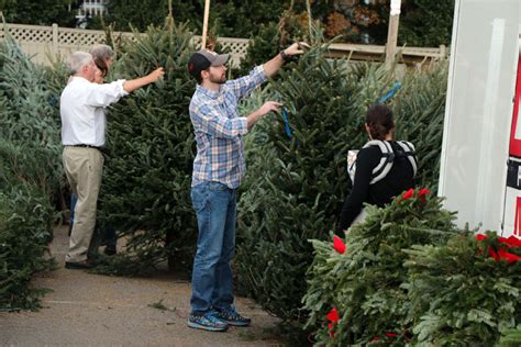 local christmas tree sales begin after thanksgiving