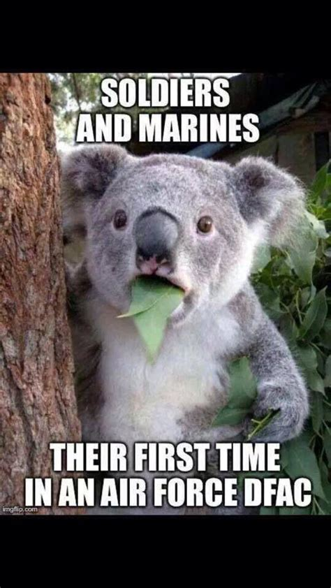 Koala Meme - air force dfac koala meme usaf military women