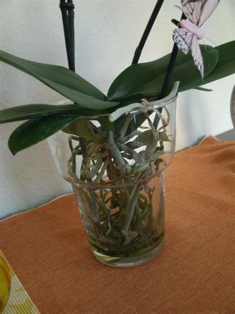 Erde F R Orchideen 427 by Pflanzen Im Glas Pflanze Im Glas Pflanzen Im Glas