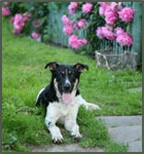 chlorpheniramine for dogs chlorpheniramine antihistamine for dogs and cats