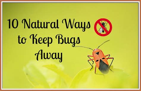 what keeps bed bugs away how to keep bed bugs away 28 images how to keep bed