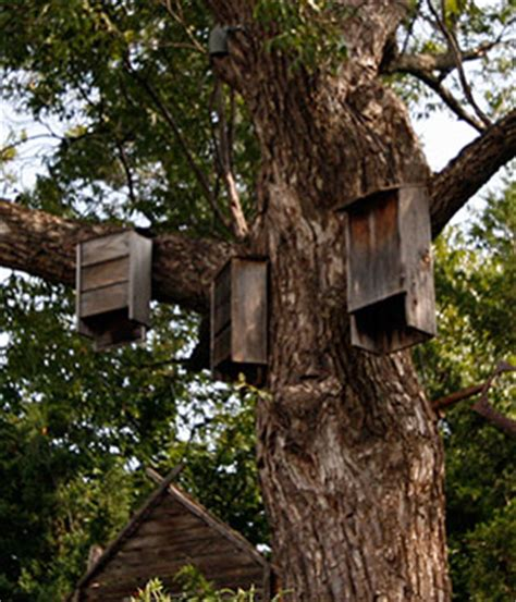 bat houses gardening solutions university of florida