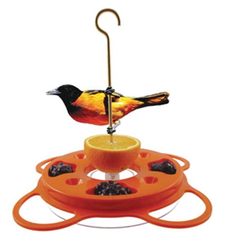 attracting orioles to bird feeders the zen birdfeeder