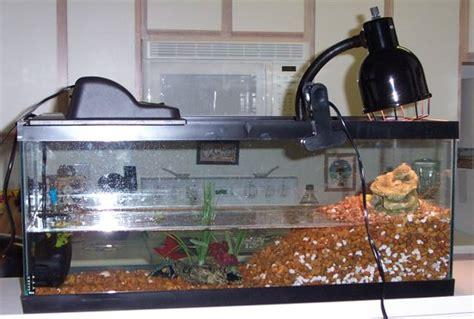 aquatic turtle basking light turtle care and setup