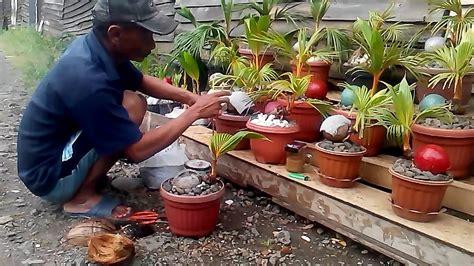 cara membuat yoghurt kelapa cara membuat bonsai kelapa youtube