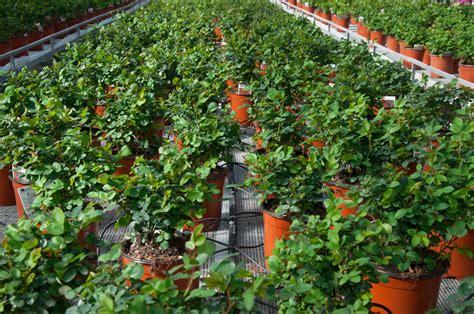 irrigazione vasi irrigazione goccia vasi