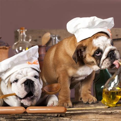 is rosemary safe for dogs safe herbs and spices for dogs greenfield puppies