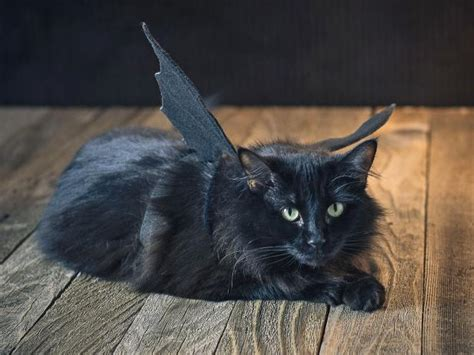 adorable diy pet costume ideas  halloween