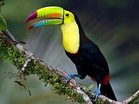 Harga Pakan Burung Canary Seed category burung heru priyambudi s