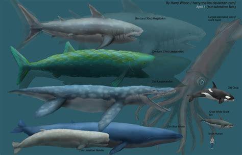 megalodon shark size maximum estimate size comparison by harry the fox on