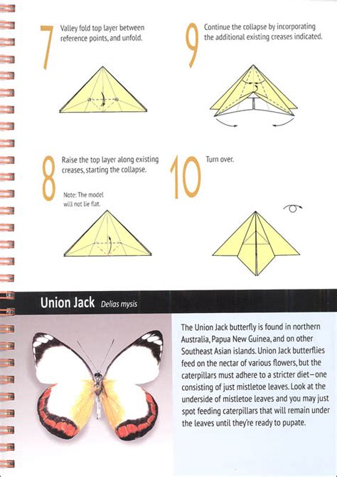 History Origami - origami butterfly history comot