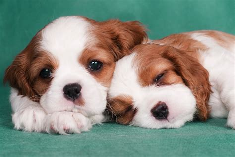 pic of puppies puppies get more sympathy than crime victims