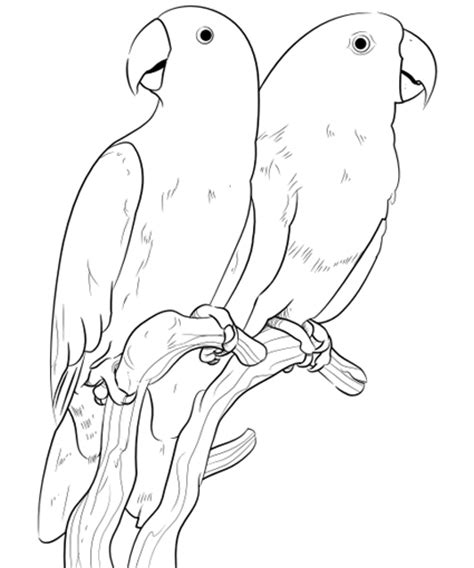 coloring pages canary bird pet bird parrot finch canary coloring pages