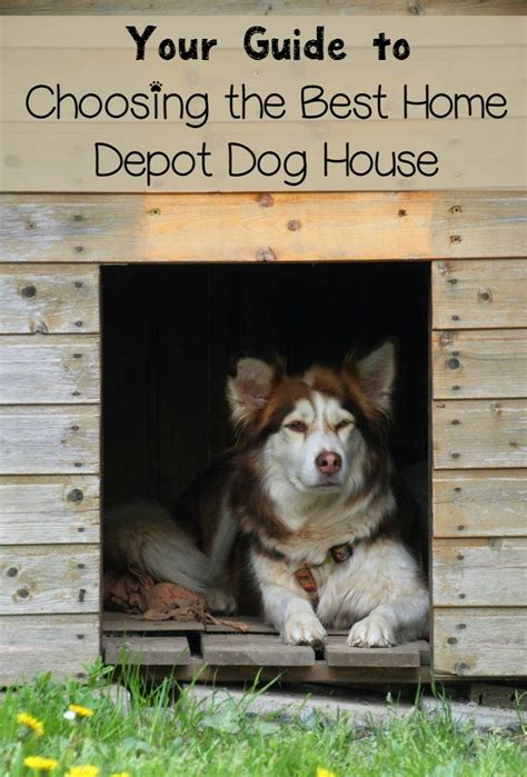 dog houses home depot buying a home depot dog house dogvills