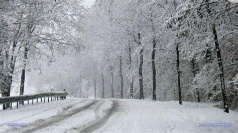 bilder nadelbäume die 80 besten schnee desktop hintergrundbilder