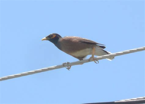 common birds south florida pictures cuepiwa