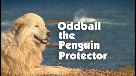 strong opinions the penguin 0141197196 meet the penguin protector oddball youtube